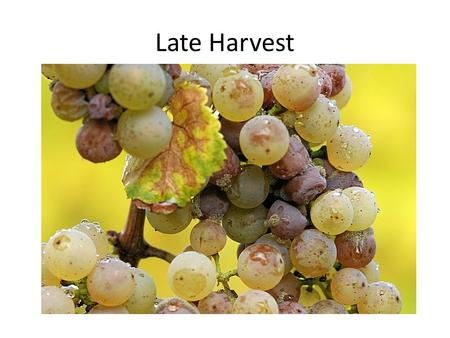 Late Harvest. Late harvest is a term applied to wines made from grapes left on the vine longer than usual. Late harvest is usually an indication of a.