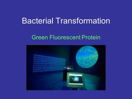 Bacterial Transformation Green Fluorescent Protein.
