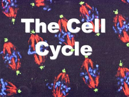 The Cell Cycle. The Life Cycle of a Cell Cell Cycle = events from one cell division to the next.