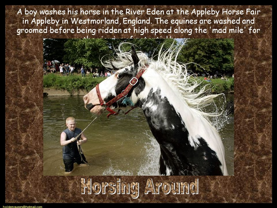 holdemqueen@hotmail.com A boy washes his horse in the River Eden at the Appleby Horse Fair in Appleby in Westmorland, England.