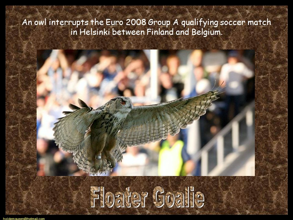 holdemqueen@hotmail.com An owl interrupts the Euro 2008 Group A qualifying soccer match in Helsinki between Finland and Belgium.