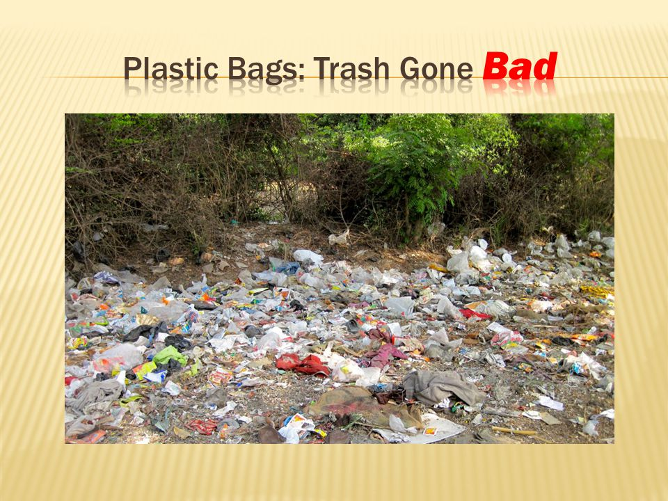  After many months of study, a ban on the distribution of non-biodegradable plastic carryout bags has been proposed.