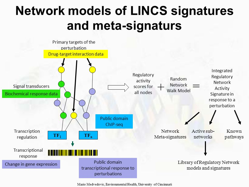 Using LINCS signatures and models to explain disease-relate signatures  Correlate the disease-related readouts (eg gene expression profile) with corresponding LINCS signatures and meta-signatures  Associate LINCS models and complementary types of readouts with the disease  Construct disease-specific regulatory model  Associate LINCS phenotypic readouts (eg images, proliferation, apoptosis) with the disease Mario Medvedovic, Environmental Health, University of Cincinnati