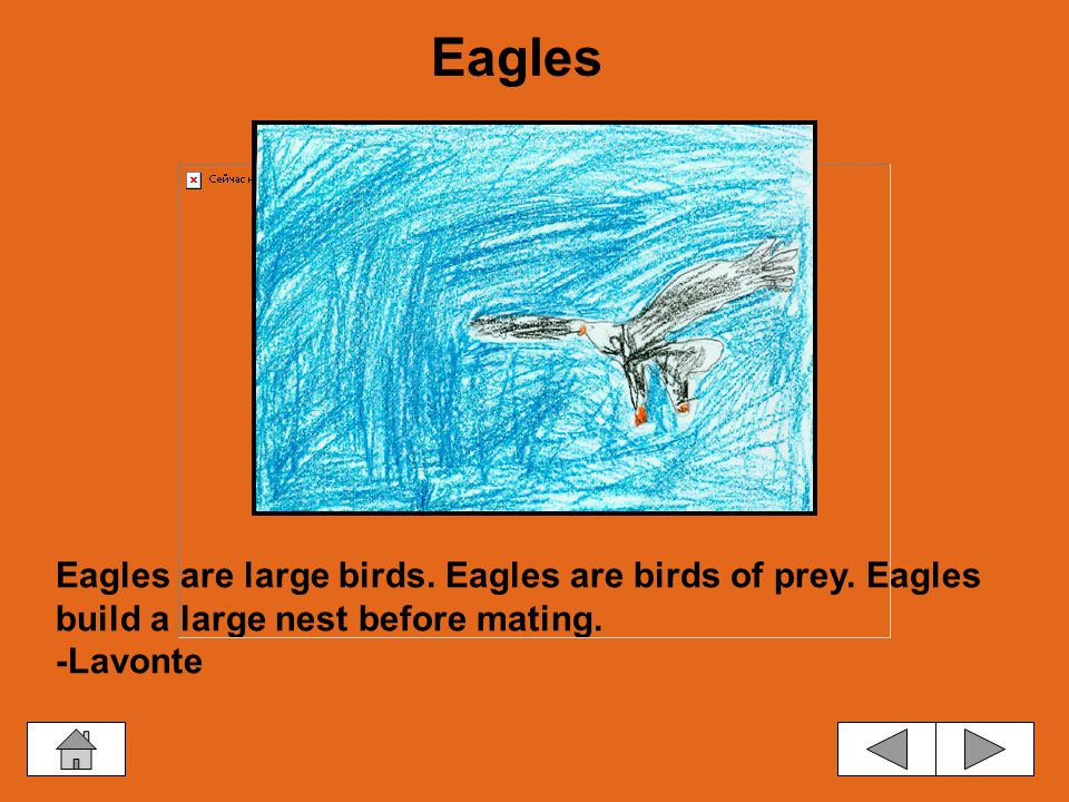 Eagles are large birds.Eagles are birds of prey. Eagles build a large nest before mating.