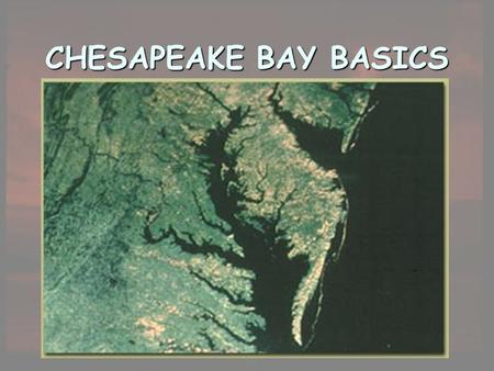 CHESAPEAKE BAY BASICS. Chesapeake as an Estuary An estuary is a semi-enclosed body of water that has a free connection with the sea and within which seawater.