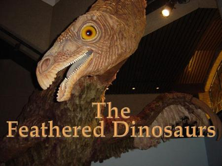 The Feathered Dinosaurs  Paleontologists have found a couple clues leading them to infer some dinosaurs had feathers.  Some trace fossils have been.