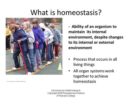 Life Sciences-HHMI Outreach. Copyright 2009 President and Fellows of Harvard College. What is homeostasis? - Ability of an organism to maintain its internal.