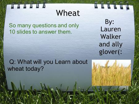 Wheat By: Lauren Walker and ally glover(: Q: What will you Learn about wheat today? So many questions and only 10 slides to answer them.
