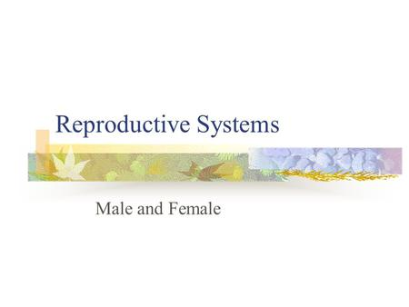 Reproductive Systems Male and Female. Male reproductive system.
