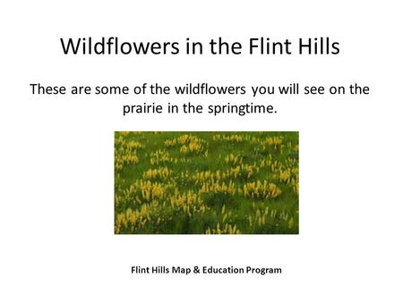 Wildflowers in the Flint Hills These are some of the wildflowers you will see on the prairie in the springtime. Flint Hills Map & Education Program.