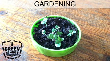 GARDENING. WHY IS GARDENING IMPORTANT? Teaches you how to grow your own food Teaches you about plants and animals Teaches you about responsibility and.