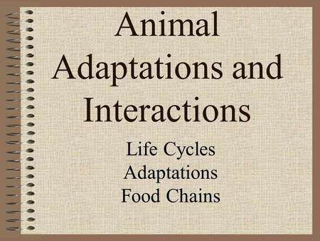 Animal Adaptations and Interactions