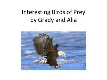 Interesting Birds of Prey by Grady and Alia. Introduction Birds of prey live all over the world. They have sharp beaks and talons. They can hunt in the.