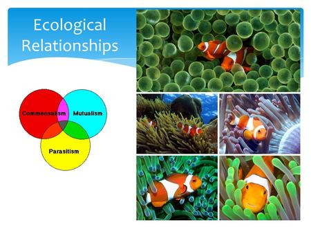 Ecological Relationships. Important Vocabulary 1.Biotic Factors: living things 2.Abiotic Factors: nonliving, physical things such as: a.Temperature, sunlight,