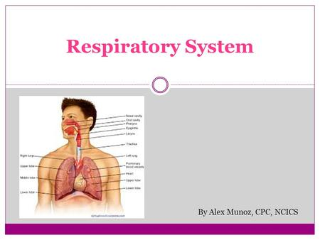 Respiratory System By Alex Munoz, CPC, NCICS. Respiratory System Anatomic site arrangement  Nose  Larynx Further subdivided by procedure  Incision.