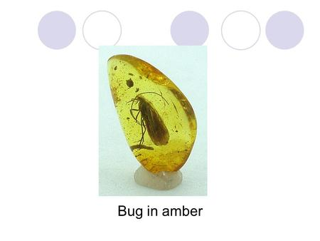 Bug in amber. Slaughterhouse-Five Review—chapter 5 1.The Tralfamadorians keep mentioning bugs in amber--Symbolism? Theme? 2.Describe Tralfamadorian books.