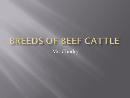Mr. Chudej.  Originated in Scotland  Black in Color  Naturally polled  #1 Beef Breed.