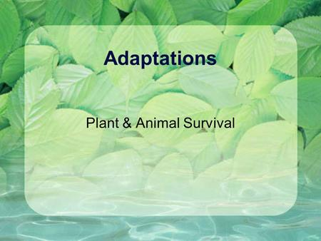 Adaptations Plant & Animal Survival. What is an adaptation? Animals have special behaviors and body parts that help them get food, keep safe, and live.