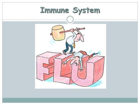 Immune System. Review What is an immune system?  The system in the body responsible for maintaining homeostasis by recognizing harmful from non harmful.