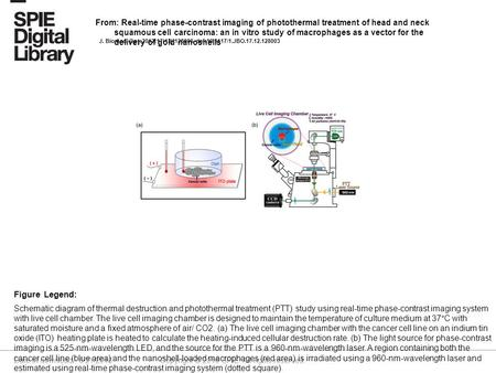 Date of download: 6/21/2016 Copyright © 2016 SPIE. All rights reserved. Schematic diagram of thermal destruction and photothermal treatment (PTT) study.