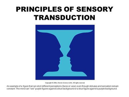 PRINCIPLES OF SENSORY TRANSDUCTION An example of a figure that can elicit different perceptions (faces or vase) even though stimulus and sensation remain.