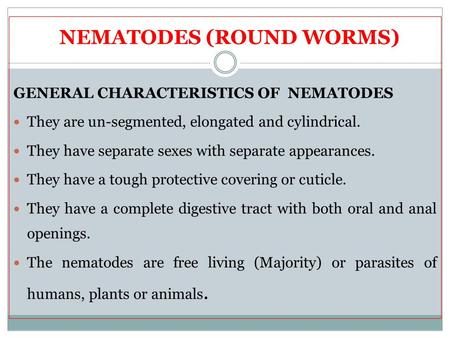 NEMATODES (ROUND WORMS) GENERAL CHARACTERISTICS OF NEMATODES They are un-segmented, elongated and cylindrical. They have separate sexes with separate appearances.