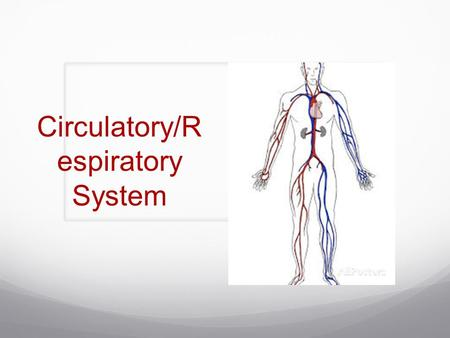 Circulatory/R espiratory System. What makes up the circulatory system? Heart Blood Blood Vessels Function: Transportation system by which oxygen and nutrients.