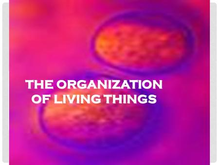 THE ORGANIZATION OF LIVING THINGS. BENEFITS OF BEING MULTICELLULAR Larger Size: larger organisms are prey for fewer predators. Also, large predators can.