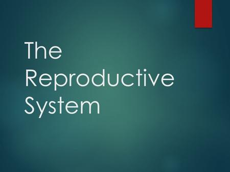 The Reproductive System. Organs of the Male Reproductive System  Penis  Urethra  Vas Deferens  Scrotum  Testes  Bladder* *Not a part of the reproductive.