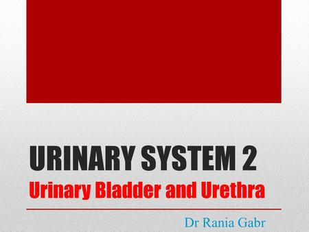 URINARY SYSTEM 2 Urinary Bladder and Urethra Dr Rania Gabr.