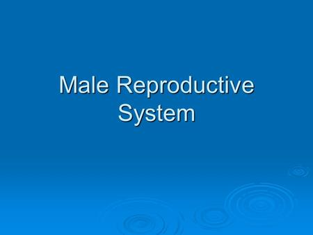 Male Reproductive System. Do Now: List all the male reproductive terms you can think of.