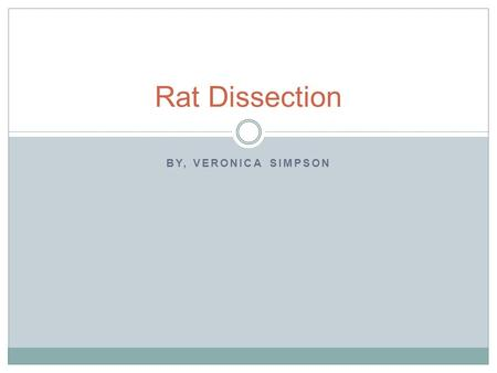 BY, VERONICA SIMPSON Rat Dissection. This is a picture of a rat dissection.
