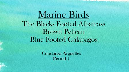 Marine Birds The Black- Footed Albatross Brown Pelican Blue Footed Galapagos Constanza Arguelles Period 1.