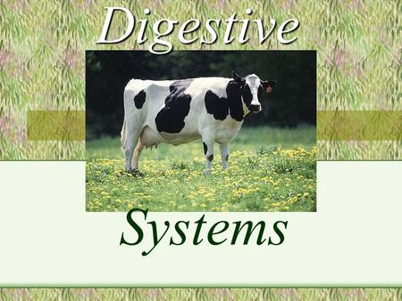 Digestive Systems. A RUMINANT IS : An animal with four distinct compartments in its stomach, which swallows its food essentially unchewed, regurgitates.