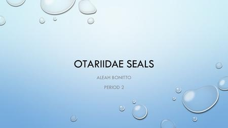 OTARIIDAE SEALS ALEAH BONITTO PERIOD 2. CLASSIFICATION  KINGDOM : ANIMALIA  PHYLUM: CHORDATA  SUBPHYLUM: VERTEBRATA  CLASS: MAMMALIA  ORDER: CARNIVORE.