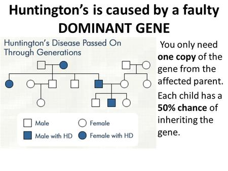 Huntington's is caused by a faulty DOMINANT GENE You only need one copy of the gene from the affected parent. Each child has a 50% chance of inheriting.