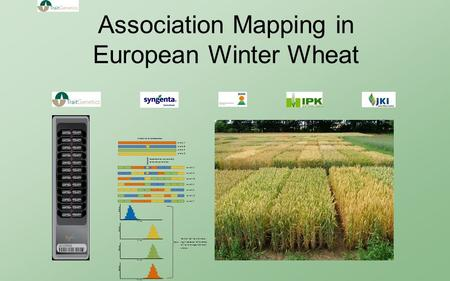Association Mapping in European Winter Wheat. Wheat is the most important crop plant in Germany with more than 3 million hectares (mainly winter wheat)