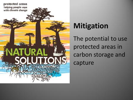 Mitigation The potential to use protected areas in carbon storage and capture.