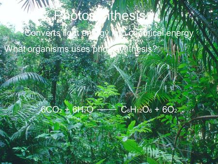 Photosynthesis Converts light energy into chemical energy What organisms uses photosynthesis? 6CO 2 + 6H 2 O C 6 H 12 O 6 + 6O 2.