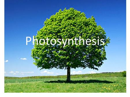 Photosynthesis. Energy and Life Living things need energy to survive. This energy comes from food. The energy in most food comes from the sun.