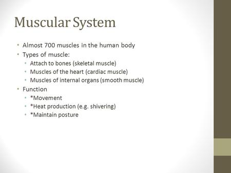 Muscular System Almost 700 muscles in the human body Types of muscle: Attach to bones (skeletal muscle) Muscles of the heart (cardiac muscle) Muscles of.