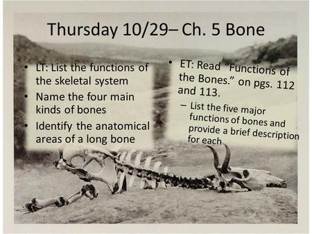 Thursday 10/29– Ch. 5 Bone LT: List the functions of the skeletal system Name the four main kinds of bones Identify the anatomical areas of a long bone.