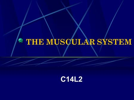 THE MUSCULAR SYSTEM C14L2. How do bones, muscles, and skin help maintain the body's homeostasis?