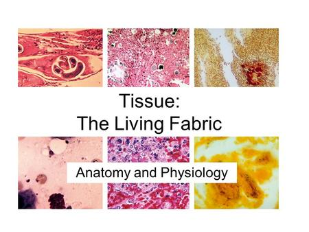 Tissue: The Living Fabric Anatomy and Physiology.