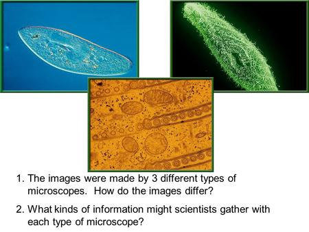 1.The images were made by 3 different types of microscopes. How do the images differ? 2.What kinds of information might scientists gather with each type.
