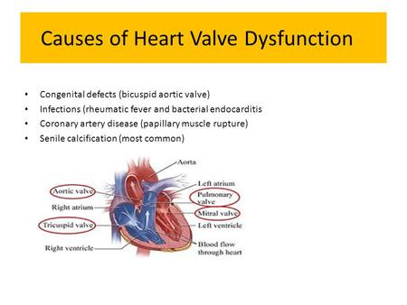 Causes of Heart Valve Dysfunction Congenital defects (bicuspid aortic valve) Infections (rheumatic fever and bacterial endocarditis Coronary artery disease.