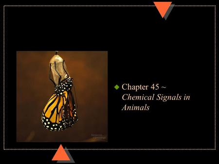 U Chapter 45 ~ Chemical Signals in Animals. Regulatory systems u Hormone~ chemical messengers secreted by endocrine gland into blood and transported to.