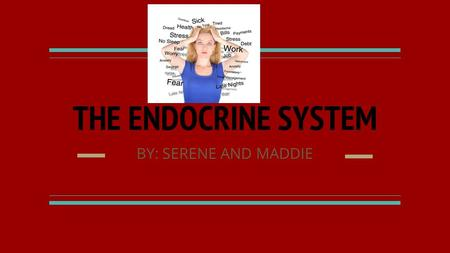 THE ENDOCRINE SYSTEM BY: SERENE AND MADDIE. The Endocrine system The endocrine system is made up of several different glands which are just organs that.