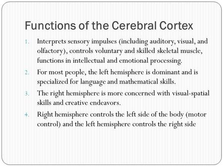Functions of the Cerebral Cortex 1. Interprets sensory impulses (including auditory, visual, and olfactory), controls voluntary and skilled skeletal muscle,
