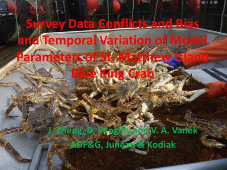 Survey Data Conflicts and Bias and Temporal Variation of Model Parameters of St. Matthew Island Blue King Crab J. Zheng, D. Pengilly and V. A. Vanek ADF&G,